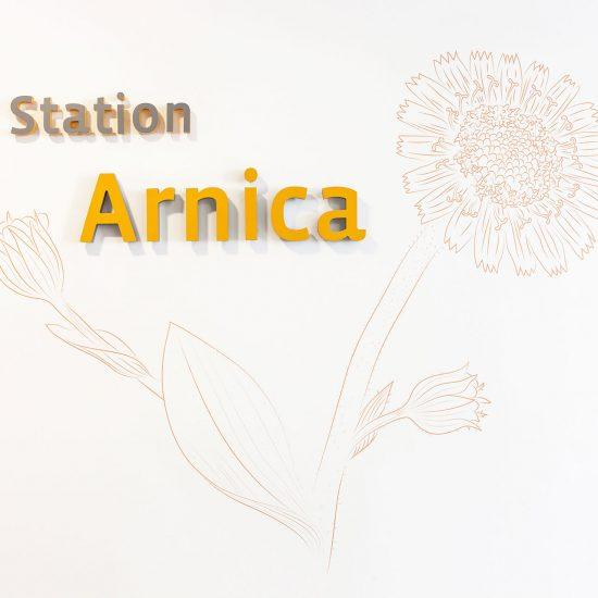 Station Arnica mit Blume